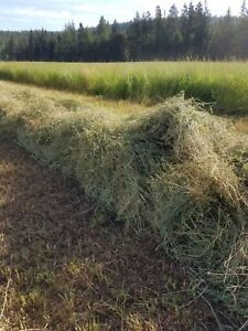 Awesome Hay!  Alfalfa Grass mix. Large square bales