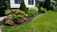 Landscaping, Lawn Maintenance, and Handyman for Cheap