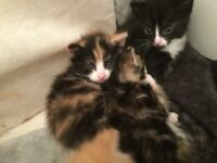 I have four beautiful kittens for sale what are looking g permeant homes
