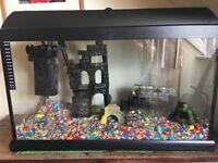 Tropical Fish Tank Set