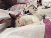 I have 2 beautiful kittens looking for forever homes