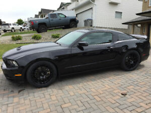 2014 FORD MUSTANG GT 5.0L - CLEAN & FAST!