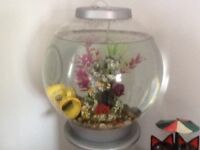 Large Biorb tank with stand and one fish