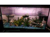 Interpet Aquarium tank 110L