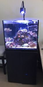 50 Gallon SC Aquarium