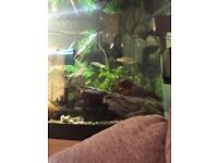 6x tropical fish