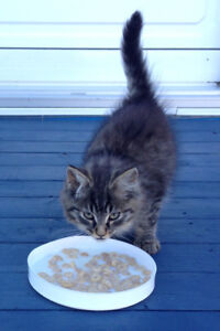 Kitten to give away