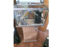 70 litres Fish tank with stand