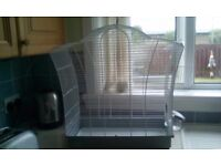 White budgie cage