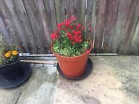 Brand new plant pots