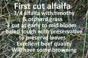 Big Square Hay Bales - Alfalfa, Timothy & Orchard grass