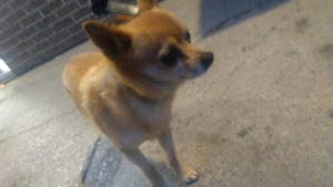 FOUND DOG BY MACS ON DEIFENBAKER
