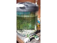 small fish tank with light