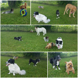 Balanced K9 Living- Accepting New Dogs into our Daycare Program