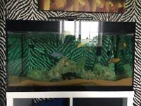 Malawi Fish tank complete setup