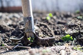 Gardener Wanted. 1 - 2 Days of work at £8.00 an hour