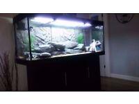 juwel rio 400 aquarium 450ltr