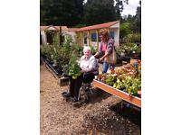 Care at Home for the Elderly