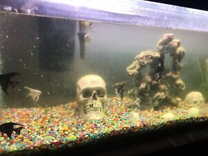 55gl fish tank accessories and fish for sale