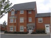 Flat share in a 2 Bed ground floor apartment.