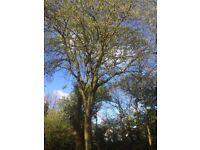 Embark Treecare