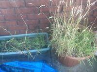 Plant pots free!