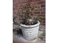Concrete plant pots with flowers and shrub