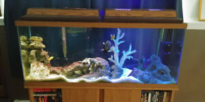 55 gallon saltwater aquarium and stand with 2 fish included