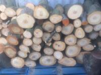 Logs or trees wanted