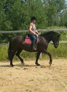 Lovely mare looking for leaser