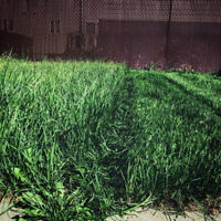 fall clean up lawn care grass installation top soil
