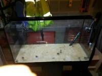 Fluval marine fish tank setup