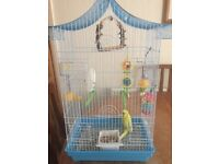 Male budgie and cage