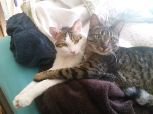 Loving, young male cats need forever home