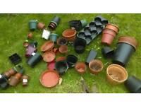 50 Plant pots