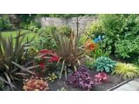 Cedar Gardening & Landscapes