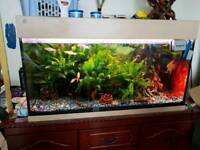 3.5 fish tank complete with every thing