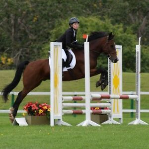 Incredibly Fun - 14.2hh Pony - Half Lease