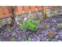 Garden Chippings (Gray Slate)