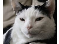 loving deaf, fat cat with big heart looking for new home