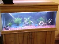 Full Fish Tank / Aquarium Setup / Tropical or Coldwater Fish
