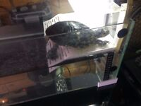 Turtle Tank For Sale Great Condition (with heater,filter,uv lamp and basking ledge)