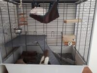 3 male rats + cage and accesories (rope, tunnel, coconut ect)