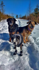 Red Dog Pet Services - Now Accepting New Group Walk Clients!