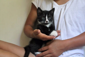 2 Social kittens looking for homes