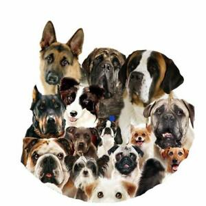 DOG BOARDING-905-686-7204 Loving Home. By 401 and Salem Exit-Aja