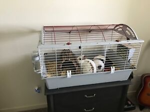 Rabbit to a good home