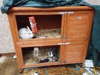 2 rabbits and a double hutch for sale 50 pound pic up as we dot have car