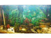 Fish tank for sale (with fish)