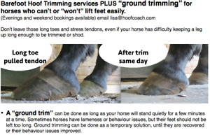 """Barefoot Hoof Trimming PLUS """"ground trimming"""" for horses"""